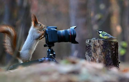 ecureuil-photographe